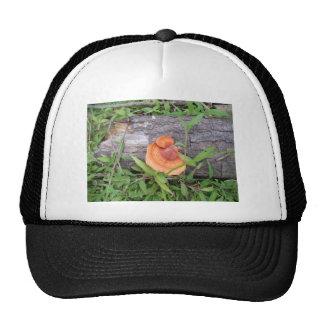 Plants, Costa Rica Hat