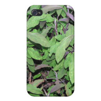 Plants Dark Red and Green Cover For iPhone 4