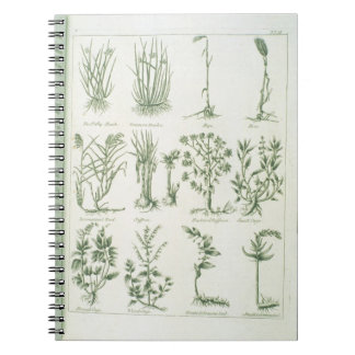 Plants from Culpeper's 'English Physician and Comp Notebooks