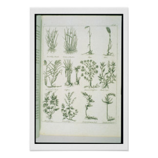 Plants from Culpeper's 'English Physician and Comp Poster