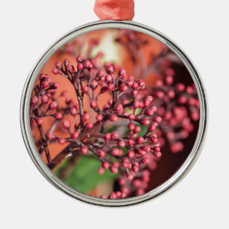plants in the garden in winter christmas ornament