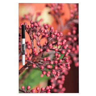 plants in the garden in winter dry erase board