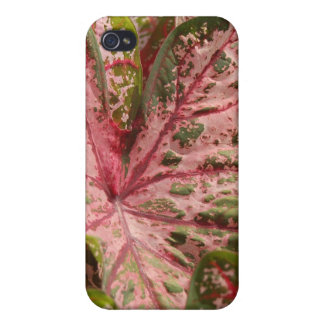 Plants Covers For iPhone 4