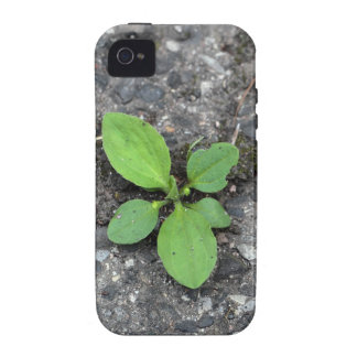 Plants on a tarred road. vibe iPhone 4 cases