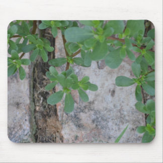 Plants on Stone Mouse Mat