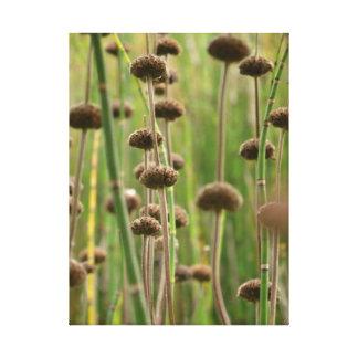 Plants- Photo on canvas