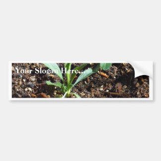 Plants Sprouts Dirt Bumper Stickers