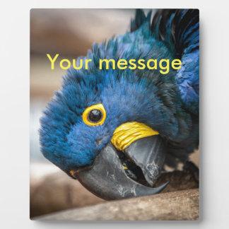 Plaque cute blue Hyacinth Macaw parrot