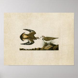 Plate 225 | Kildeer Plover | Birds of America Poster