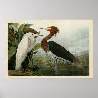 Plate 256 | Purple Heron | Birds of America Poster
