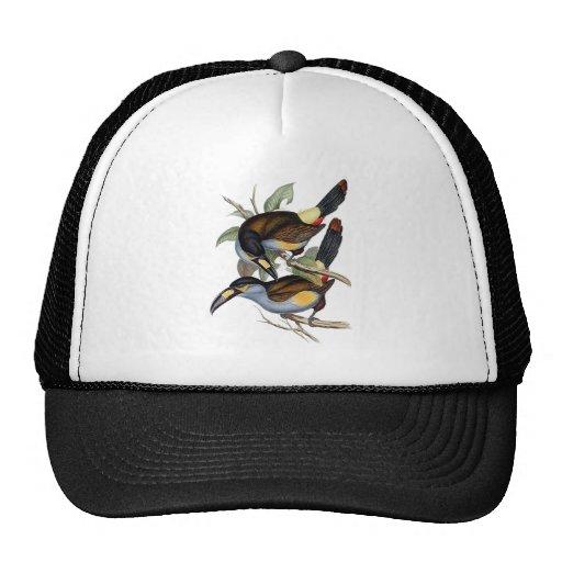 Plate-billed Mountain Toucan Trucker Hat
