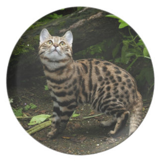 plate - black footed cat