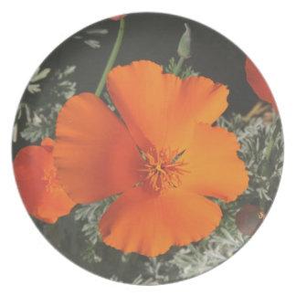 Plate, California Poppy Dinner Plates