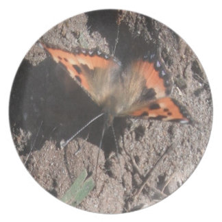 Plate Hairy Butterfly Dirt Foraging
