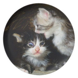 plate - maine coon kittens