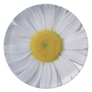 Plate - New Daisy All Daisy
