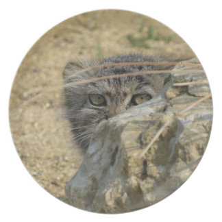 plate - pallas cat