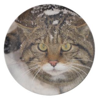 Plate - Scottish wildcat