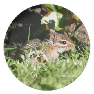 plate with photo of cute chipmunk