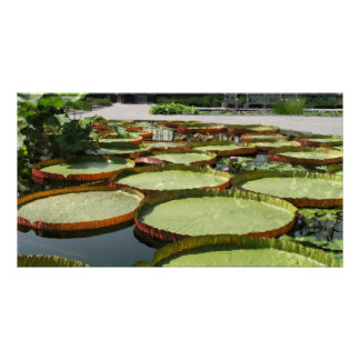 Platter water lily pads print