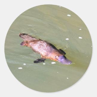 PLATYPUS IN WATER EUNGELLA AUSTRALIA ROUND STICKER