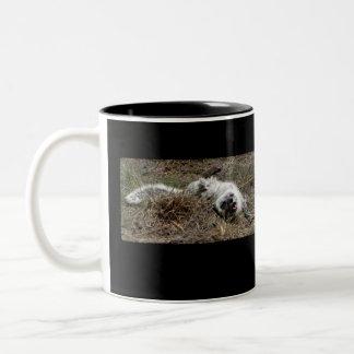 Playful Arctic Fox Two-Tone Mug