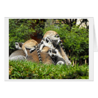 Playful baby Ring tailed Lemurs Greeting Card