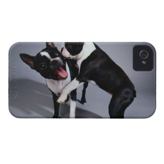 Playful Boston Terriers Case-Mate iPhone 4 Case
