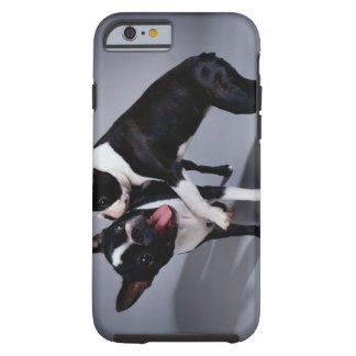 Playful Boston Terriers Tough iPhone 6 Case