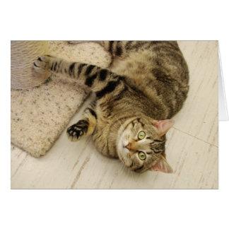 Playful Cat Cards