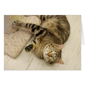 Playful Cat Note Card