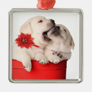 Playful Christmas Puppies In A Red Container Christmas Ornament