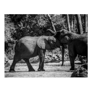 Playful Elephants Postcard