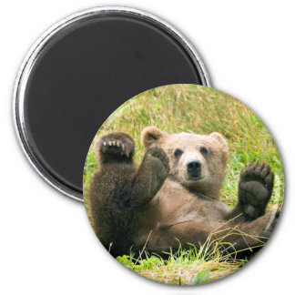 Playful Grizzly Bear Refrigerator Magnet