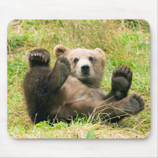 Playful Grizzly Bear Mouse Pad