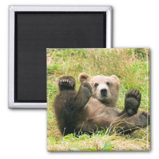 Playful Grizzly Bear Square Magnet