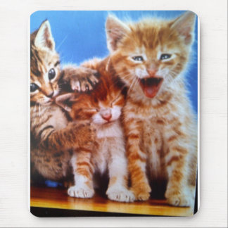 playful kittens mouse pads