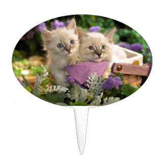 Playful Kittens Peep Out Of A Picnic Basket Cake Picks