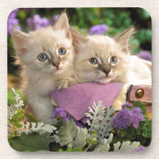 Playful Kittens Peep Out Of A Picnic Basket Drink Coasters