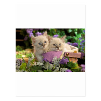 Playful Kittens Peep Out Of A Picnic Basket Postcard