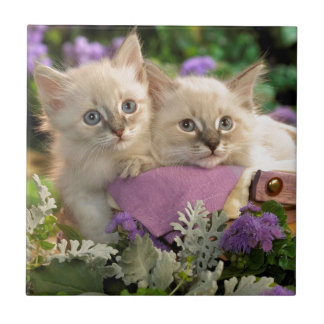 Playful Kittens Peep Out Of A Picnic Basket Small Square Tile