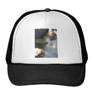 Playful Kitty Hats