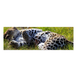 Playful Leopard Business Card Templates