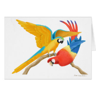 Playful Macaws Card