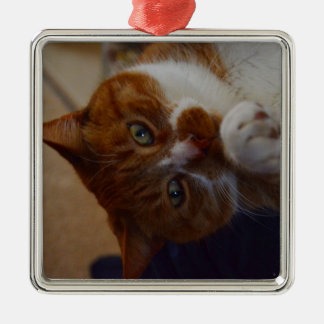 Playful Nutmeg. Christmas Ornament