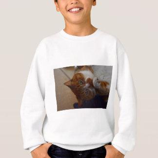 Playful Nutmeg. Sweatshirt