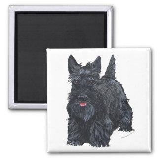 Playful Scottish Terrier Square Magnet
