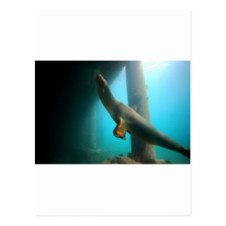 Playful sea lion swimming underwater tranquility postcard