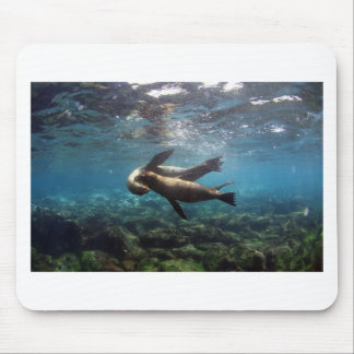 Playful sea lions Galapagos Islands Mousepad