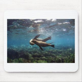 Playful sea lions Galapagos Islands Mouse Pad